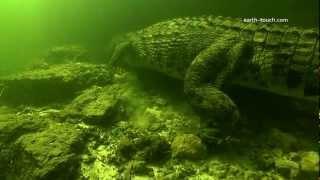 Adrenalin Rush! Divers Swim with Crocs | Crocodile Quest Ep04