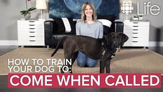 How to Train Your Dog to Come When Called | Dog Training | CBC Life