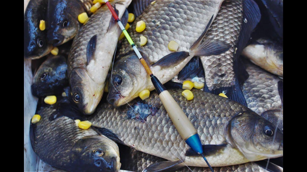 Рыбалка на поплавочную удочку! ПРИКОРМКА НЕ НУЖНА! ГЛАВНОЕ НАЙТИ РЫБУ!