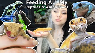Feeding ALL My Reptiles & Amphibians