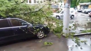 Огромное дерево рухнуло на машину в Туле