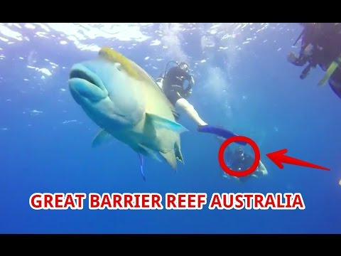[WOW] Great Barrier Reef Australia Vacations -  Things To Do | Travel Fun Guide