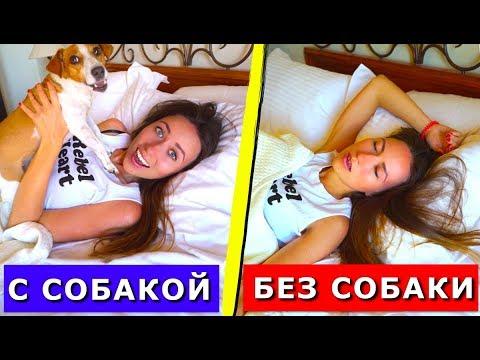 Жизнь с Cобакой VS Жизнь без Cобаки Моё утро с собакой КРИТ | Elli Di Pets