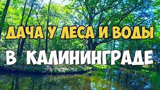 Дача у леса и воды в Калининграде, стоит ли строить дом на даче в Калининграде, СНТ Ромашка