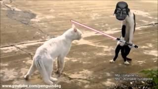 Briga de Gatos Ninjas - Golpe da Cobra e Outras Versões
