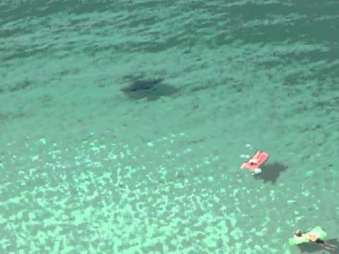 Panama City Beach Manta Ray 7-4-2011