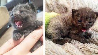 Little Kittens Was Rescued From The Trash Can And Miss Almost His Tail