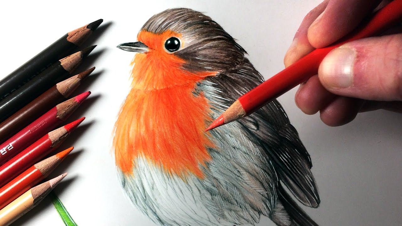 how to draw a robin youtube