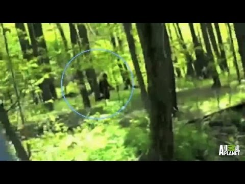 Best of Bigfootage | Finding Bigfoot