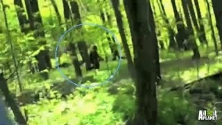 bigfoot videos