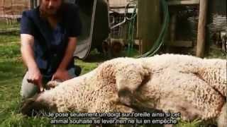 Preuves que le rituel Halal est un Miracle ! 1/3 - VOSTFR -HD
