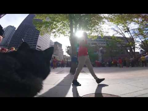 Siberian Husky Enjoys Crazy Street Performance Just Like Human