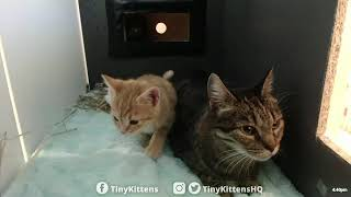 new-pregnant-cat-and-kittens-tinykittens-com