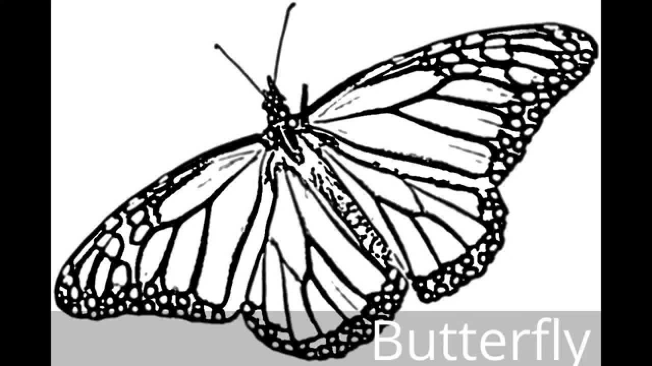 Butterfly how to sketch a butterfly with music real butterfly