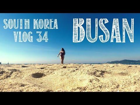 BUSAN WEEKEND GETAWAY  SOUTH KOREA VLOG #34 POHANG FISH MARKET, FIREWORK FESTIVAL