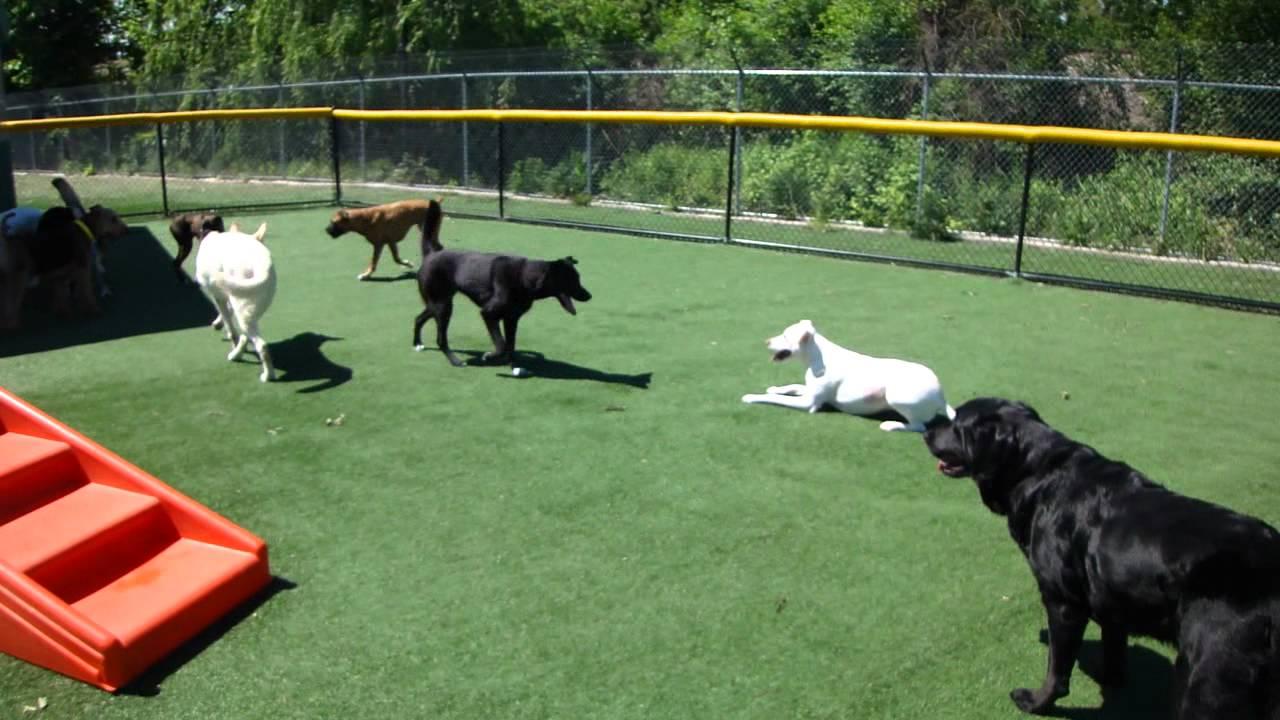 Dog training royal oak