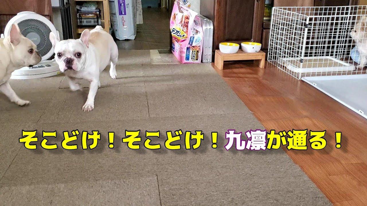 そこどけ!そこどけ!九凛が通る!Get out of the way! Get out of the way! Ku Rin is coming through!