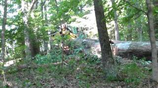 logging old-growth red oak in Indiana with a Timberjack 360