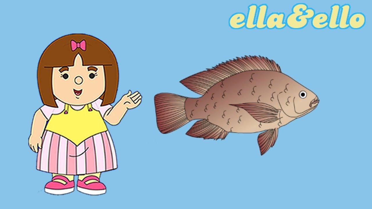 Mengenal Ikan Gurame   Puri Animation