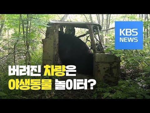 [지금 세계는] 러시아, 버려진 차량은 야생동물 놀이터 / KBS뉴스(News)