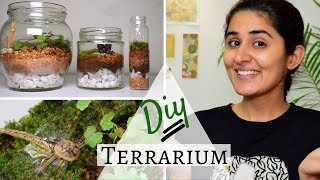 How to Make a Terrarium for Free 💚