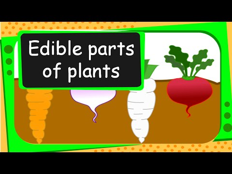 Science - Edible Parts of Plants - English - YouTube