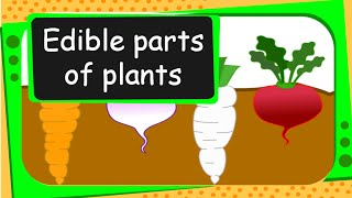 Science - Edible Parts of Plants - English