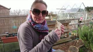 Early March 2017 Allotment  Plot Update. New beds & finishing carrot box.