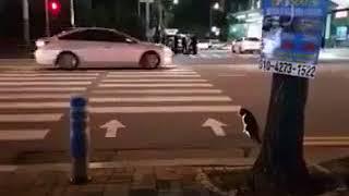 некоторые коты умнее людей))