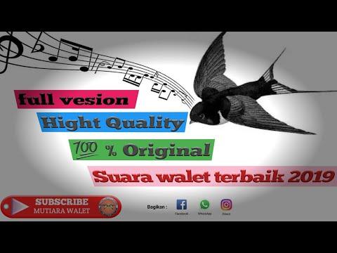 Full Version Suara Walet Terbaik 2019 - 100% Original Hight Quality