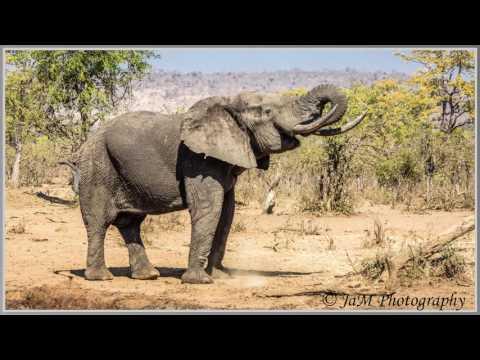 Elephants of the Kruger National Park