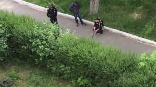Дикий кабан в Магнитогорске 13.06.2016