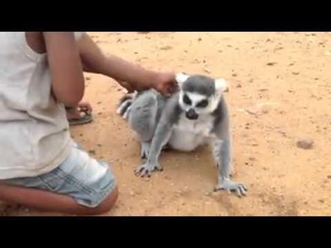 Kids petting Lemur
