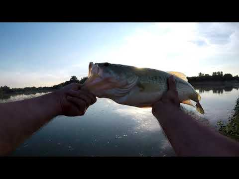 Thames River And Gravel Pit - Fishing For Bass