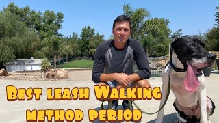 Fastest loose leash walking method// Guaranteed