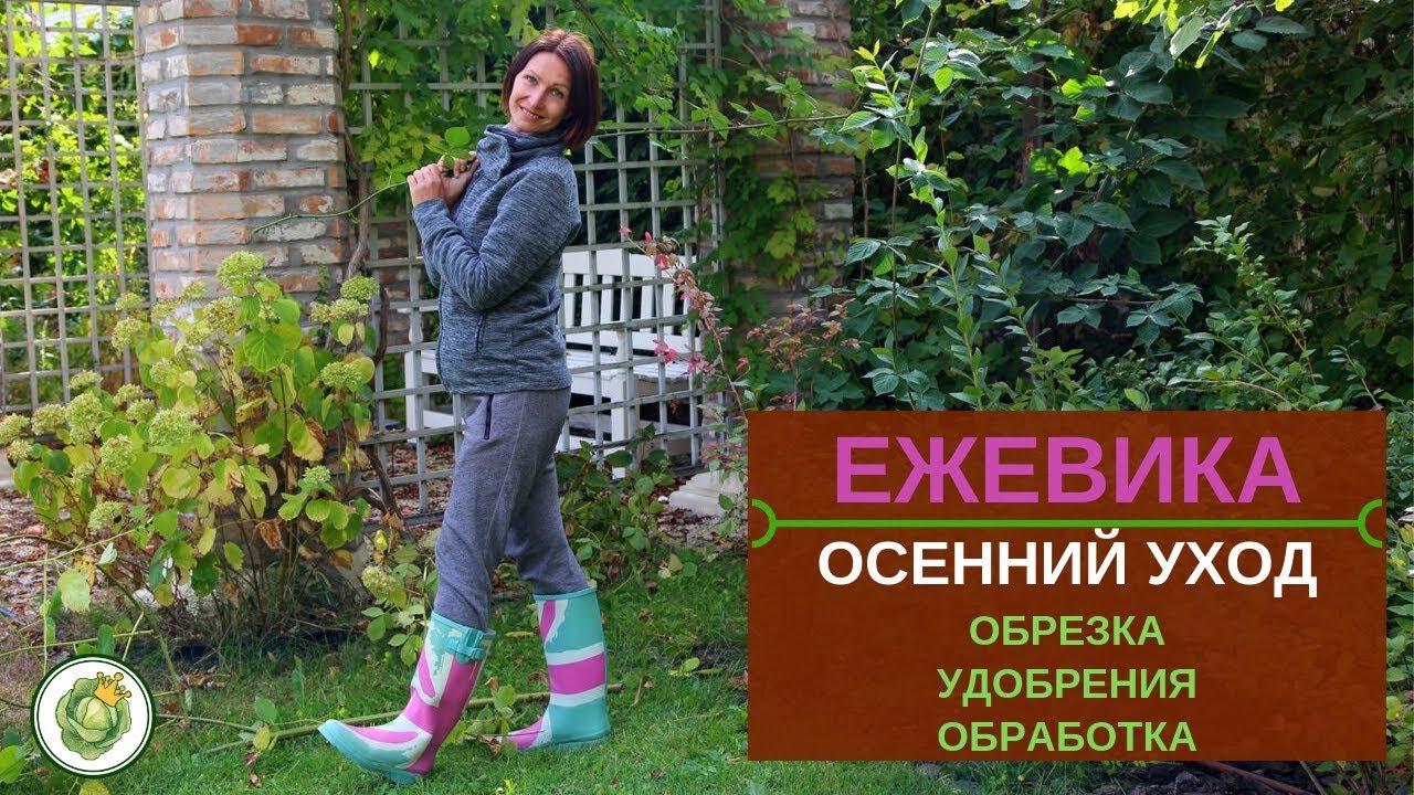 Обрезка и обработка сада, участка в Белгородской области | Услуги ... | 720x1280