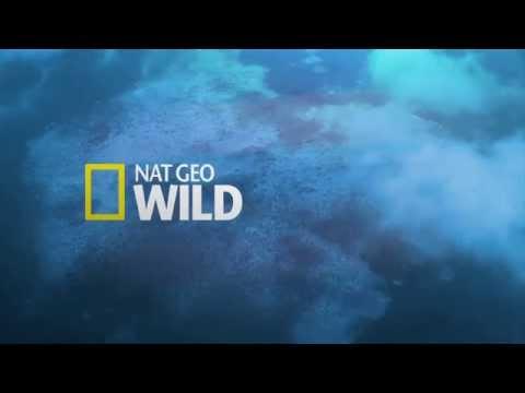 Nat Geo Wild HD France - Continuity - September 24, 2014 [King Of TV Sat]