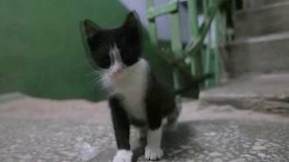 Милый котенок ищет нового хозяина