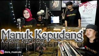 Manuk Kepudang (Cover) Koplo tarling || Diora Musicale ||