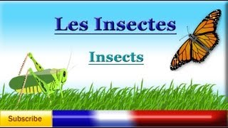 Learn French - Insects names (vocabulary Lesson) - Les insectes