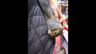 Squirell training with BEST SQUIRREL EVER