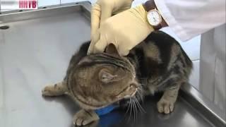 Бездомных животных будут прививать от бешенства