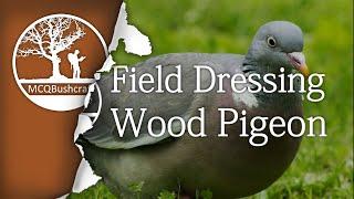 Field Dressing Game: Wood Pigeon