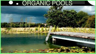 Creating a Massive Organic Pool in 4 minutes