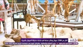 الاخبار - متحف حديقة الحيوان... أكثر من 2200 حيوان وطائر محنط فى متحف حديقة الحيوان بالجيزة