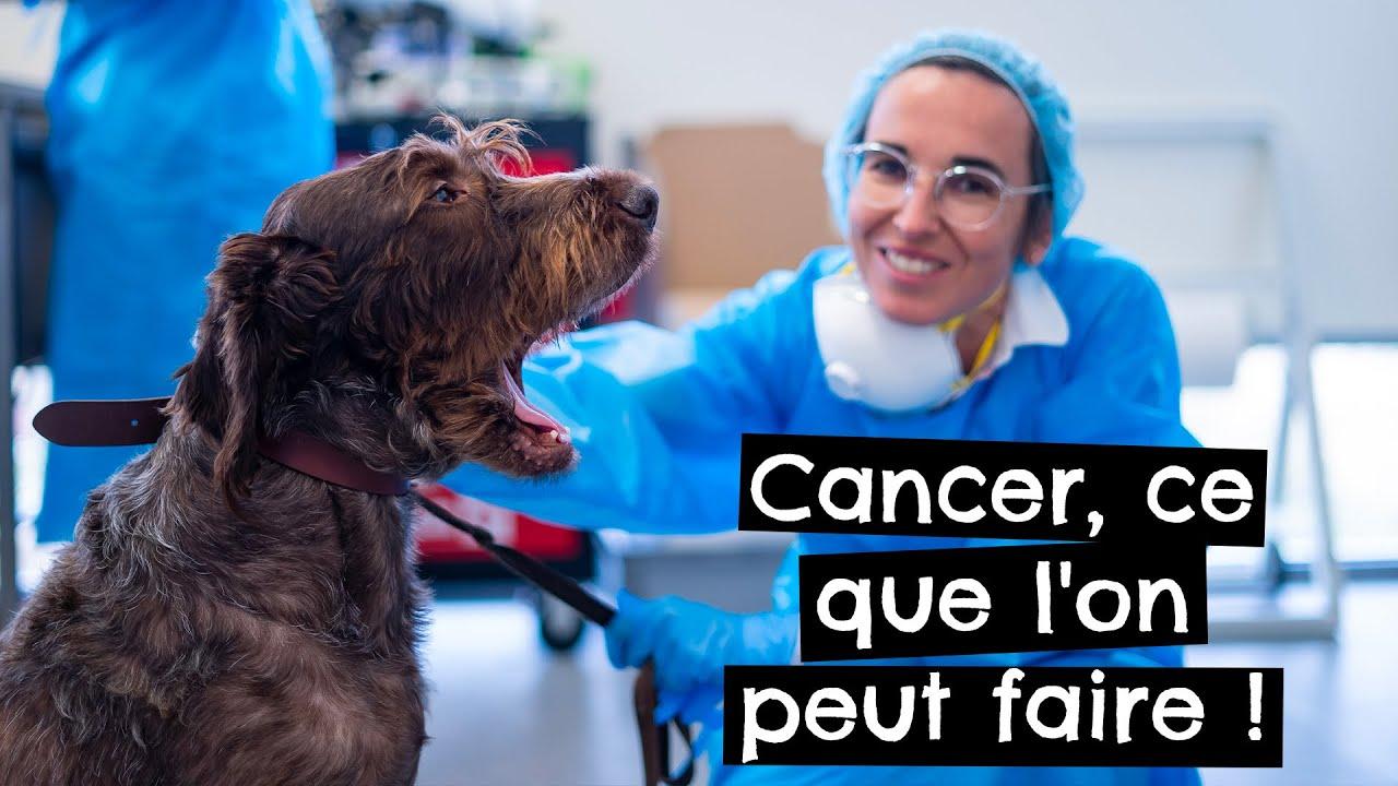 Cancer chez les animaux, ce que l'on peut faire !