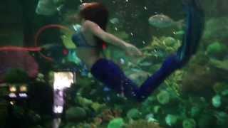 Mermaid Show at the Silverton Hotel & Casino. Las Vegas, NN  5/19/13