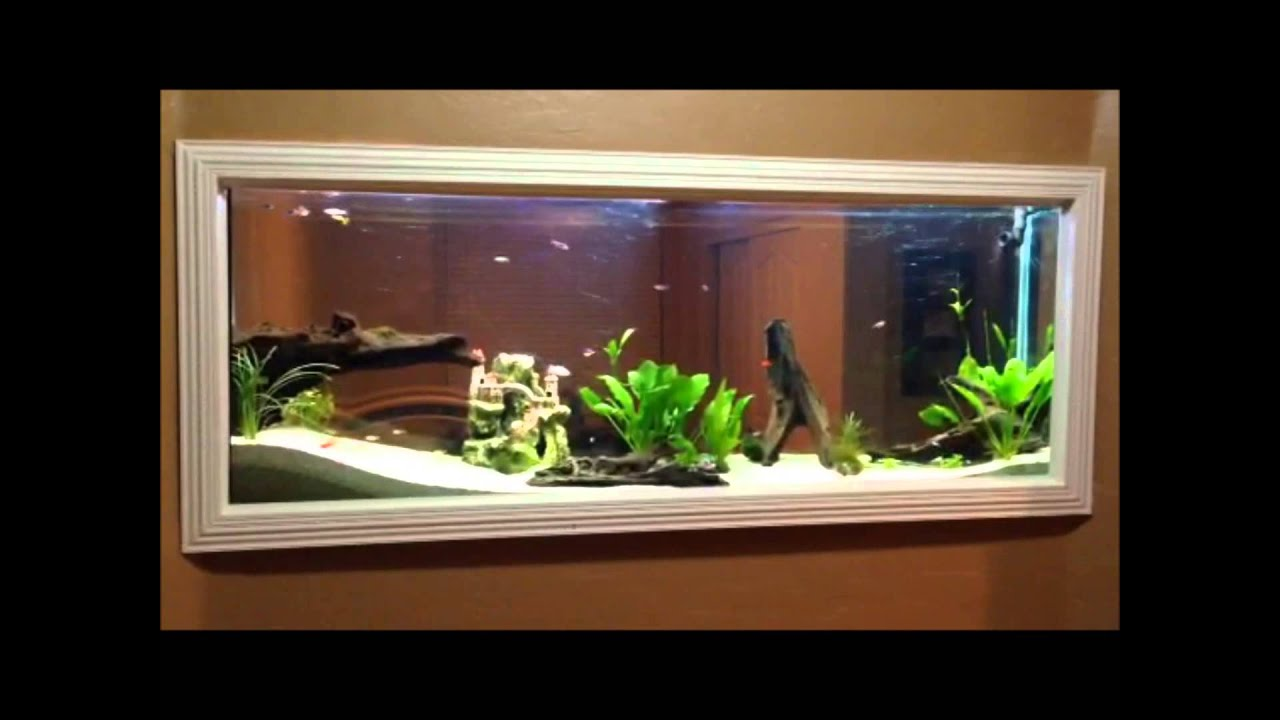 DIY - Wall built in Fish tank 150gl aquarium freshwater set up - YouTube