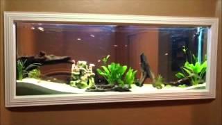 DIY - Wall built in Fish tank 150gl aquarium freshwater set up