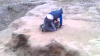 зомби атакуют бобра